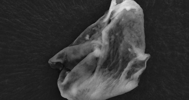 alien-microbes-image